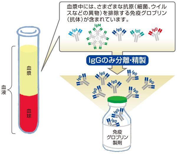 ヒスタミン 加 人 免疫 グロブリン